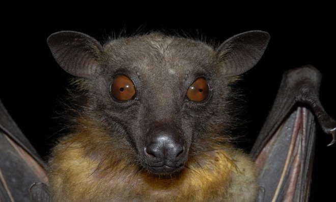 Bats and Bugs | Zoological Society of London (ZSL)