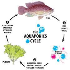 Aquaponics |